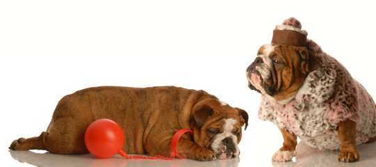 keeping the husband on a ball and chain - bulldog love