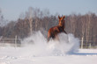 snow bang made by chestnut horse