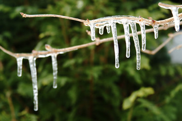 Ice hanging on tree branch