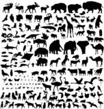 bib animals collection