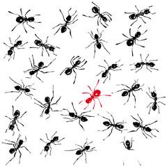 fourmis noir et rouge