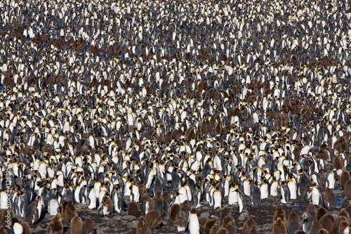 In de dag Pinguin Pinguinkolonie