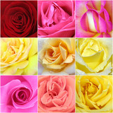 collage of roses from nine photos