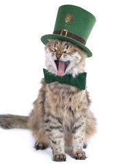 Singing St. Patrick's Day cat