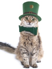 Cute St. Patrick's Day cat