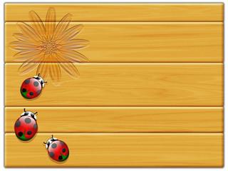Coccinelle su legno-Coccinelles sur bois-ladybirds on wood