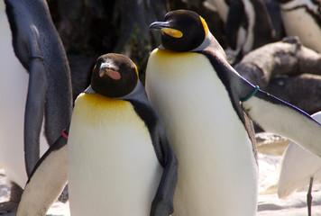 仲良しペンギン