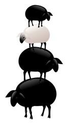 pila di pecore nere più bianca