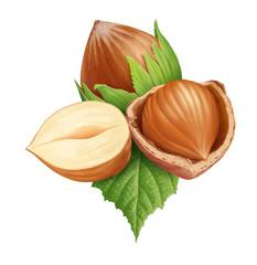 Hazelnuts 3