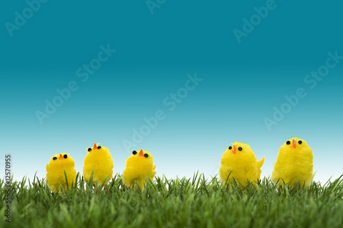 family of yellow chicks on a green grass Poster