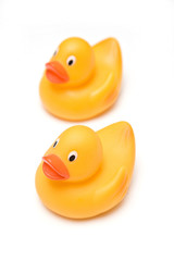 Rubber Ducks isolated on a white studio background.
