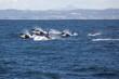 Whale Whale Whale - 12596908