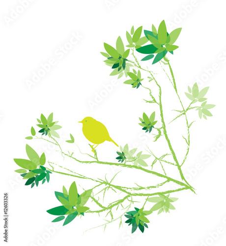 Petit oiseau sur branche avec feuilles vert sur fond for Petit oiseau avec houpette