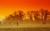 Fototapete Landschaft - Natur - Haustiere