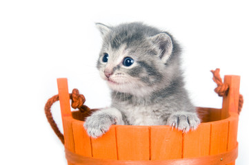 Gray kitten in an orange bucket