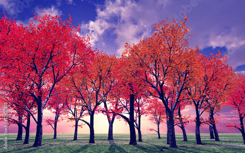 Beautiful autumn - 12617501