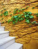Vines on Yellow Wall by Steps Outdoors