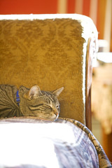 Striped cat sleeping on yellow couch