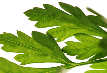Close up of green leaves against the white background
