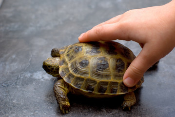 reptile turtle animal