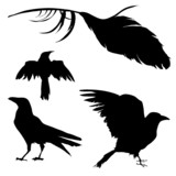 Vector silhouettes of ravens, crows, other birds poster