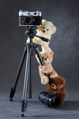 camera and group of teddies bears isolated on grey background