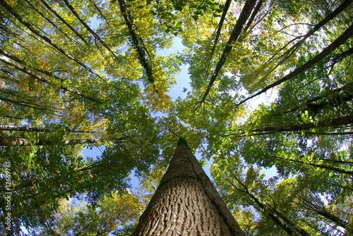 Papiers peints Campagne Bois