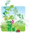 Variety of field herbs, plants, grass and ladybird. Vector