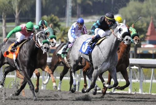 Plexiglas Paardrijden Grey Horse In Front