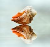 marine shell poster