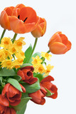 Fototapety Frühlingsblumen
