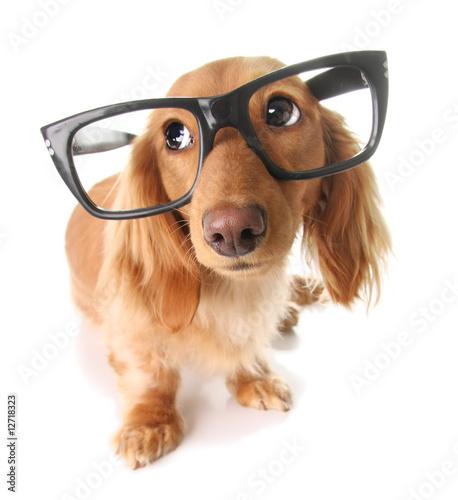 Smart puppy - 12718323