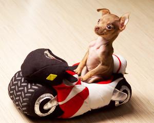 dog motor-cyclist