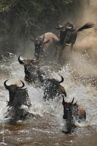 Fotobehang Antilope The great migration of wildebeest at Masai Mara