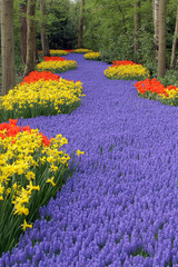 Flower bed, Keukenhof, the Netherlands