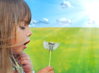 Blowing dandelion on the meadow