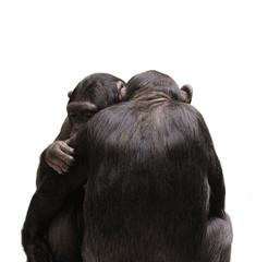 Monkey cuddle