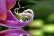 Fototapeten,cymbidium,phalaenopsis,nass,rieseln