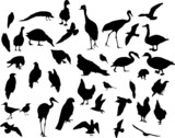 thirty eigth bird silhouettes poster