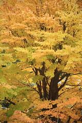 栃の木紅葉