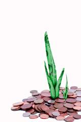 Money shoot growth