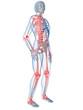 skelett mit schmerzenden gelenken