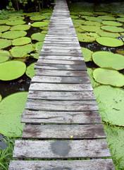 "Wood bridge over Amazon pond whit ""Victoria regia"" lilys"