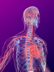 menschlicher körper mit blutkreislauf