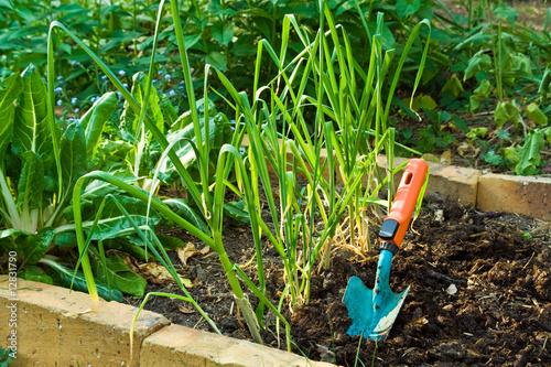 gärtnern, gardening