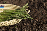 green asparagus spears in backet on the soil poster