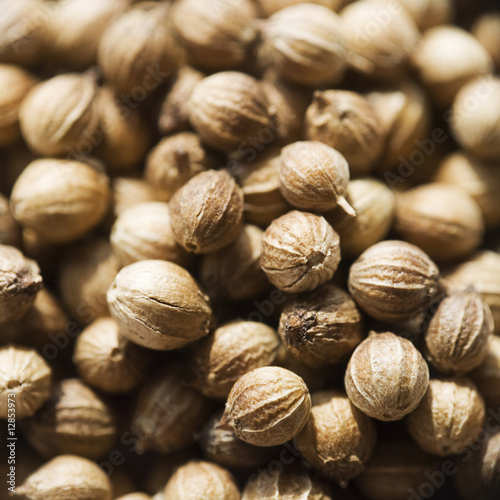 Coriander seed macro with shallow depth of field
