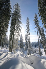 Magic forest in winter