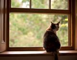 Fototapety Katze auf dem Fensterbrett