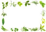 Fototapety Herb Leaves